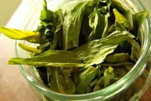ramsons - Allium ursinum L.
