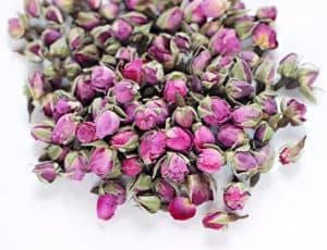 Rosa damascena buds