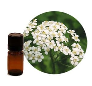 Achillea millefolium oil