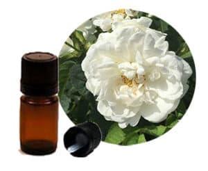 масло от роза алба