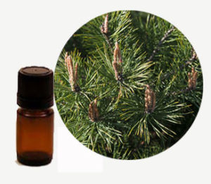 масло от бор, pine essential oil