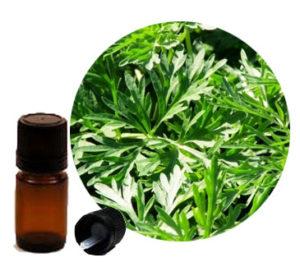 масло от пелин, wormwood essential oil