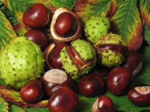 horse chestnut, конски кестен