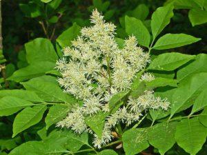 Flowerine - ash